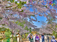Spring in Tokyo=15 (tiokliaw) Tags: world holiday colour reflection travelling beautiful beauty japan digital photoshop wonderful garden tokyo interesting fantastic nikon scenery holidays colours exercise earth expression awesome perspective entrance images explore walkway winner greatshot imagination sensational greetings colourful discovery hdr finest overview creations excellence addon highquality inyoureyes teamworks digitalcameraclub supershot hellobuddy mywinners mywinner worldbest anawesomeshot colorphotoaward aplusphoto flickraward almostanything goldstaraward thebestofday flickrlovers nikonflickraward sensationalcreations blinkagain burtalshot