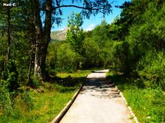 Siguiendo el camino (Nati C.) Tags: naturaleza rboles camino paisaje ordesa aragn parquenatural efectoorton