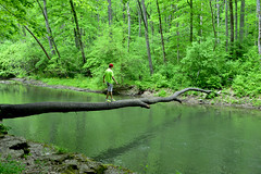 Crossing over (susan_komer) Tags: statepark park trees ohio water forest river outdoors hiking