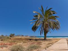 PERCHELES BEACH - MAZARRON - SPAIN (toksikosmos) Tags: panorama palms spain seascapes murcia beaches ultrawideangle costacalida sonya7