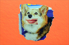 Mail Art Postcard No. 4569 (Dave Whatt) Tags: orange dog colour cute mouth surrealism postcard lips fluorescent mailart