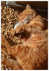 (Yo IN) Tags: gato peluche dormido contento