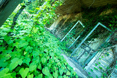Green Ivy and Doors (Ellen Heath Photography) Tags: wood favorite house green doors ivy foreground