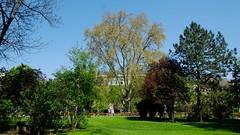 Vienna_City-Hall-4 (rhomboederrippel) Tags: vienna park tree austria cityhall sunny april fujifilm rathaus citycenter citycentre 2016 1stdistrict 1bezirk xe1 rhomboederrippel