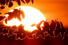 Moments (fxdx, off for holiday :-)) Tags: sunset orange sun leaves silhouette backlight wow moments mood p900 brilliant