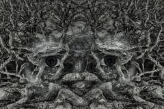 Twisted Tales.  125-366 (FadeToBlackLP) Tags: abstract strange digital canon dark mono mirror moss eyes moody doubleexposure branches surreal tokina creation mirrored drama magical twisted hdr padleygorge samyang