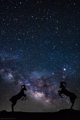 Bighorn Sheep Chasing the Milky Way (muhammad_elarbi) Tags: california park longexposure nightphotography blue portrait sky sculpture usa white color love nature beautiful night canon stars landscape fun photography colorful nightimages purple desert sheep natural state live space center hobby astrophotography land astronomy nightsky 28 anzaborrego core buckhorn galactic milkyway borregosprings 14mm 70d rokinon canonusa teamcanon