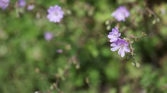 SAMSUNG CSC (fbegemenfb) Tags: flower macro nature turkey trkiye samsung blumen 60mm makro macrolens iek doa yedigller nx1 yedigllermillipark samsungnx samsungnx1 nxclub