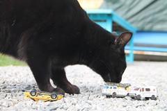 Le chat qui domine les voitures en miniature (antoinebouyer) Tags: chat noir