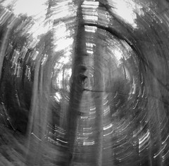 Untitled (Dan Raybould) Tags: squareformat blackandwhite slowshutter blur pentaxq woodland