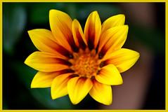 AH62_7404 (der_andyrandy) Tags: blumen blte garten natur macro makro outdoor wow gelb canoneos7d amazingamazing thisphotorocks
