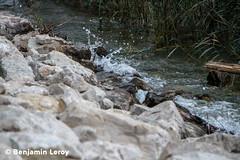 IMG_8100 (LR+C) (Benji Rallye) Tags: lac bourget france eau caillou extrieu