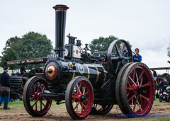 IMGL6657_Bedfordshire Steam & Country Fayre 2016 (GRAHAM CHRIMES) Tags: bedfordshiresteamcountryfayre2016 bedfordshiresteamrally 2016 bedford bedfordshire oldwarden shuttleworth bseps bsepsrally steam steamrally steamfair showground steamengine show steamenginerally traction transport tractionengine tractionenginerally heritage historic photography photos preservation photo classic bedfordshirerally wwwheritagephotoscouk vintage vehicle vehicles vintagevehiclerally rally restoration foster engine borderqueen 14636 1936 ji7021