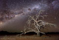 Spooky Tree Starscape (Panorama Paul) Tags: lightpainting stars namibia nikkorlenses namibrand nikfilters nikond800 wwwpaulbruinscoza paulbruinsphotography deadacaciatree