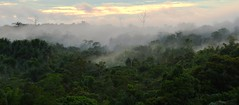 Dia que finda (kenia.nattrodt) Tags: old trees sunset wild mist green nature fog clouds forest landscape amazon rainforest amazonia