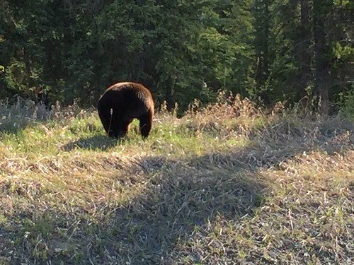 Black bear behind