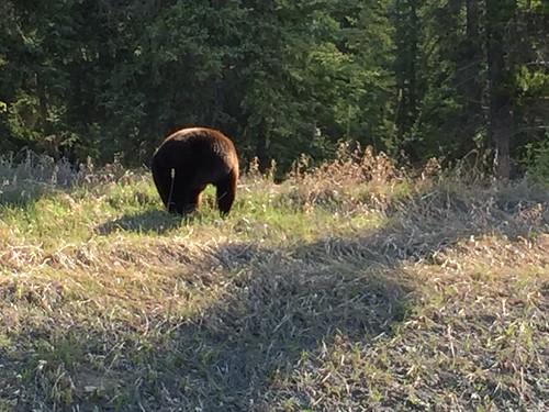 Black bear behind