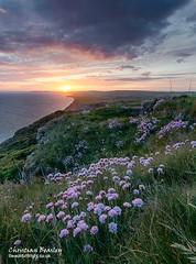 Gore Cliff Blackgang Sunset (Christian Beasley) Tags: sunset thrift isleofwight blackgang