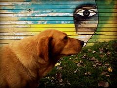 (toma mi mano... (Felipe Smides) Tags: streetart amigo mural amiga perro pintura valdivia perra jardínbotánico muralismo uach smides felipesmides