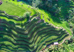 Rice Fields In Bali From Above (Stuck in Customs) Tags: november blue houses shadow red people bali orange white black color colour reflection building green nature yellow horizontal architecture night dark indonesia outside outdoors lights hotel mirror living village view rice outdoor steps rr resort huts nighttime fields dailyphoto indonesian paddies 2015 dji mandapa hdrphotography stuckincustoms treyratcliff p2015 stuckincustomscom ritzcarltonreserve fc350 aurorahdrpro