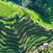 Rice+Fields+In+Bali+From+Above