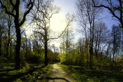 The Time of the Greening of the Trees (Key.in.a.Can) Tags: panorama sunlight green leaves forest denmark spring woods path danmark odense beech fyn funen nikond3100 kohaveskov