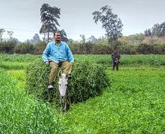 A Load of alfalfa (Nadia Rifaat) Tags: life people green rural work landscape countryside outdoor donkey fields farmer peasant alfalfa egypt