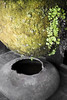 Green Planet (FTonyC) Tags: fern green water moss lanzarote bowl planet teguise spinosa x100s