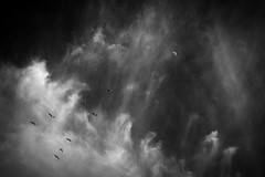 2016-06-11 Not all those who wander are lost (** RCB **) Tags: voyage travel bw moon birds clouds fly flying geese daily nb luna ciel photomontage reach sly nuages ci wander oiseaux cirrus vast hss 2016 oies cirrusclouds touslesjours 366 vaste volant errer atteindre sliderssunday