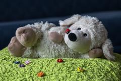 Lavendi is relaxing (Markus Trienke) Tags: canon relax toy eos sheep meadow plushie warmies 70d lavendi