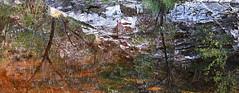 Canyon Reflection (studioferullo) Tags: light arizona plants lake plant abstract reflection tree nature water colors outdoors mirror pretty shine desert tucson outdoor hiking canyon impressionism serene sabinocanyon