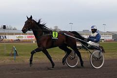 IMG_2218 (lovelymelancholy) Tags: horses horse hevoset hevonen horseraces ravit imrautio ravihevonen