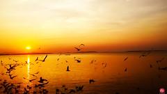 Sunset (Kt.Pau) Tags: sunset sea sun beach state burma myanmar mon mawlamyine