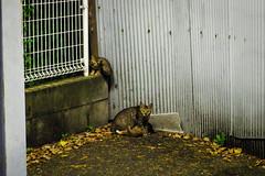 Today's Cat@2016-08-01 (masatsu) Tags: cat catspotting thebiggestgroupwithonlycats pentax mx1