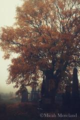 Undercliffe (micahmoreland) Tags: old uk autumn england english fall abandoned halloween grave graveyard statue fog stone dead death mood cross headstone cemetary foggy atmosphere creepy spooky forgotten gravestone british haunting vault crypt northyorkshire mysteious