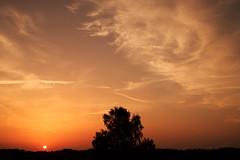 time will never be waiting for us (A.Ciepielewska) Tags: sky niebo cloud clouds nikon nikond610 nikon610 fullframe fx outdoor nature natura sunset zachd dusk serene polska poland voice olsenowo photography polishphoto polishphotography tree trees drzewo drzewa village countryside lubelskie red sun sunlight lighting light wiato soce sunny