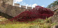 Tower of London Poppies come to Lincoln (Sue_Shaw) Tags: poppies poppy flower floral red flood castle lincolncastle lincoln lincolnshire canon canon80d canoneos historicbuilding