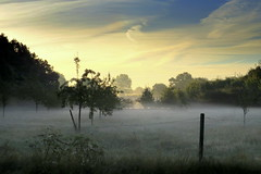 Orchard Meadow #54 (ursulamller900) Tags: orchardmeadow morning morningdew landscape
