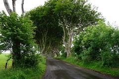 DSC05113 (raehyunie) Tags: dark hedges ireland