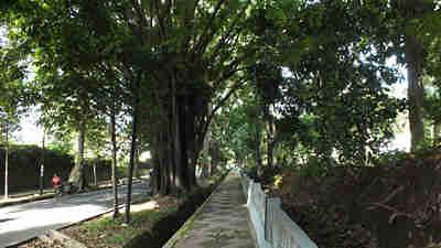 Pohon menghasilkan oksigen