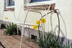Locked Up Bench (Bas Tempelman) Tags: shadow sun white garden bench spring lock daffodil groningen slot lente schaduw wit narcissus pseudonarcissus narcissen