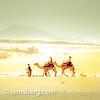 Swakopmund, Namibia, Africa -  Camels walking through the desert with people (Remsberg Photos) Tags: travel wild people sun hot animal sand adventure camel burn seal transportation heat mirage namibia survival swakopmund heatwaves skelotoncoast