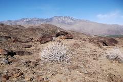 san jacinto mountains (h willome) Tags: desert hiking palmsprings 2015 vonstrail
