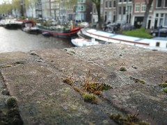 IMG_20160427_142447 (underforest) Tags: netherlands amsterdam moss