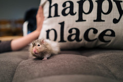 Day 14 - Our Little Hamster Gizmo