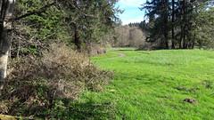 20160331_091316 (ks_bluechip) Tags: creek evans trails preserve sammamish usa2106