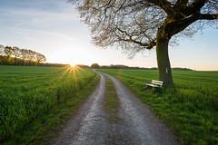 Pause oder weiter ins Licht?! (webpinsel) Tags: natur felder landschaft sonnenaufgang münsterland frühling morgens morgendämmerung halternamsee