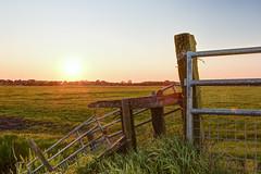 Sunset (Rimon01) Tags: sky sun green netherlands grass sunshine nikon shine cows sheep sunny hdr 18105 bracketing cloudlesssky fech 7images d7200