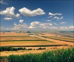 Endless fertile fields (Katarina 2353) Tags: summer film landscape nikon europe serbia fields agriculture vojvodina srbija katarinastefanovic katarina2353
