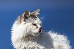 Wounded Stray Street Cat (Fredrik Hjalmarsson) Tags: rhodos